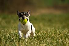 DogPark4